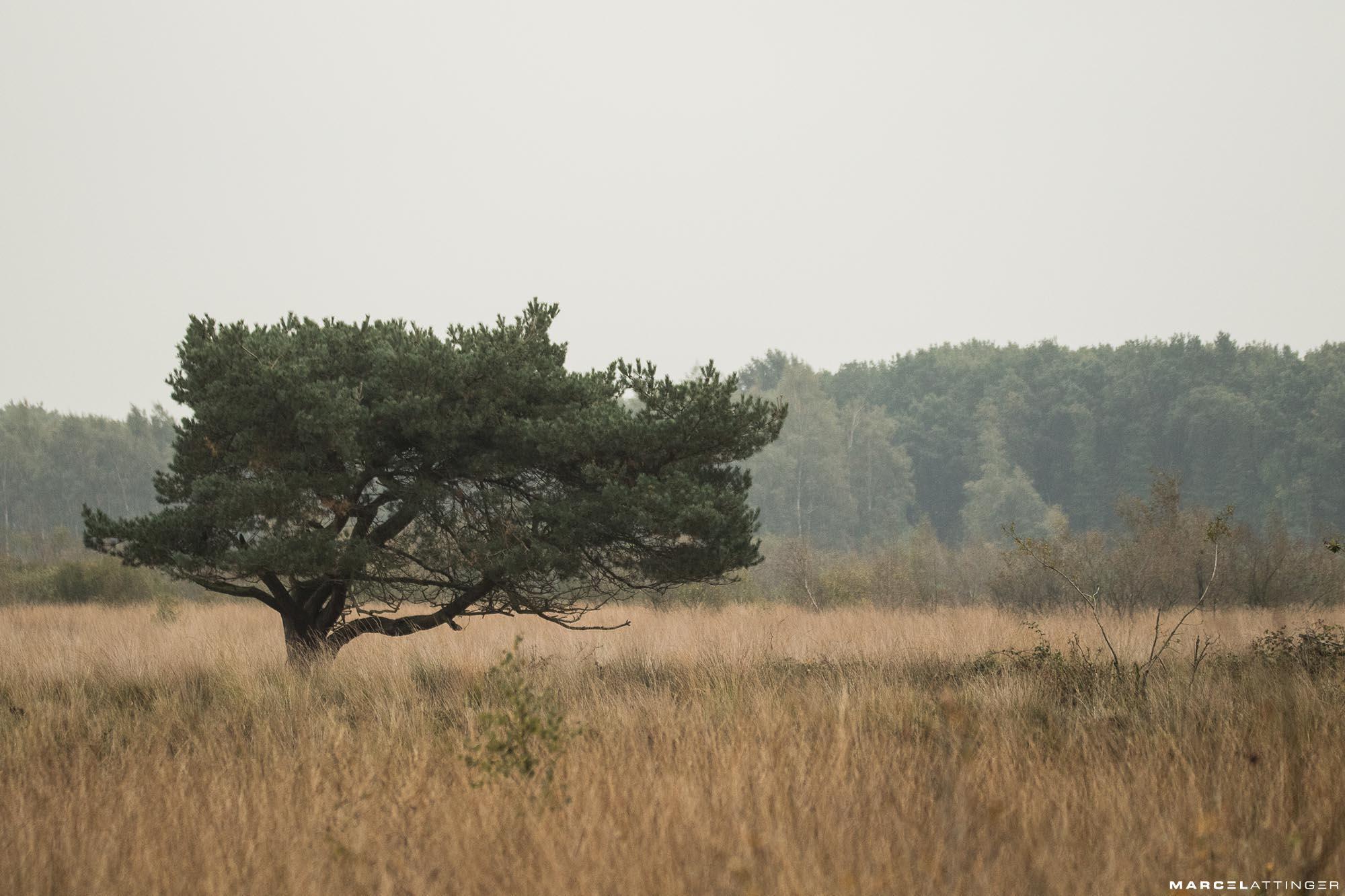 Boom in grauw landschap op de Groote Peel