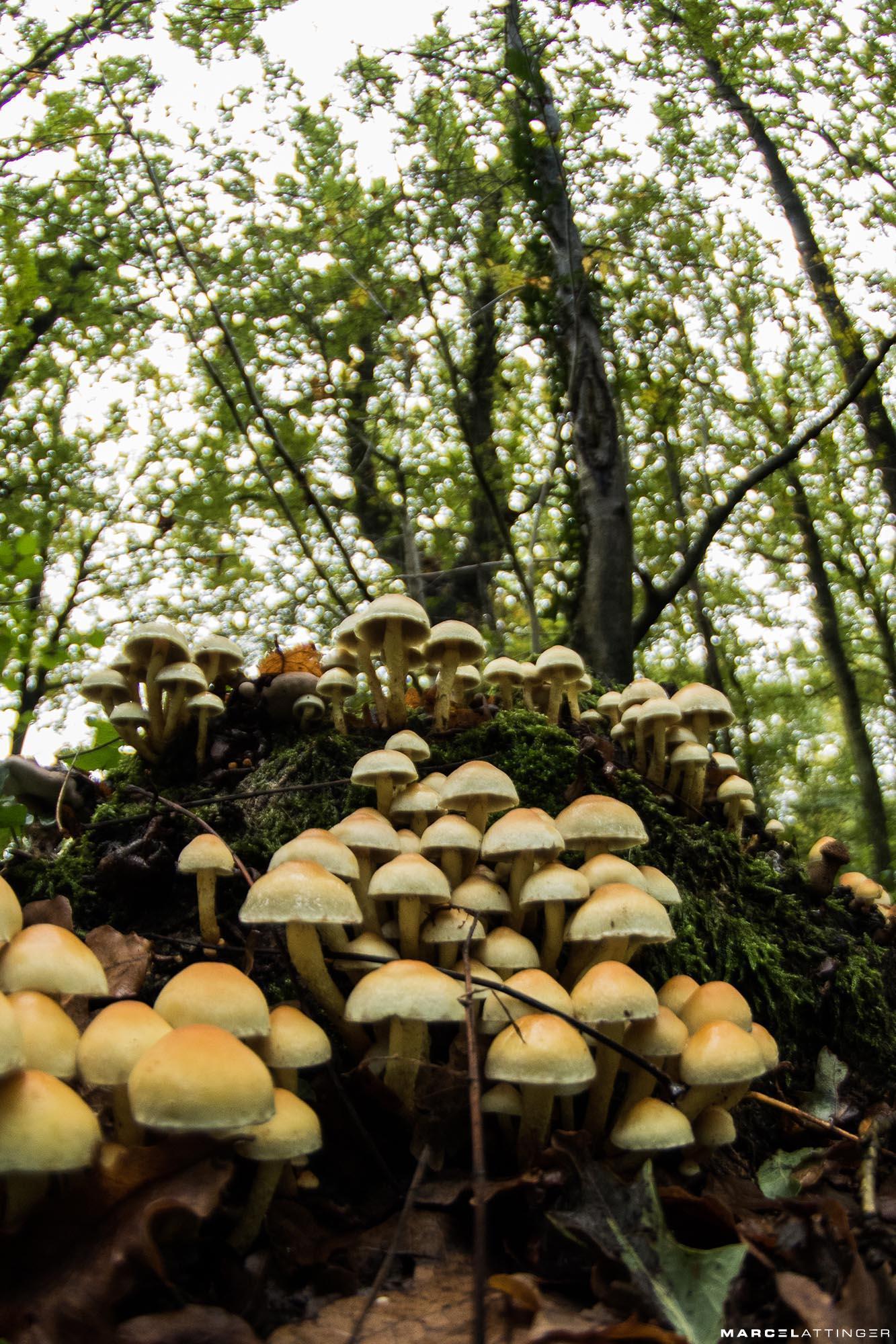Groep paddenstoelen genomen met een fisheye lens