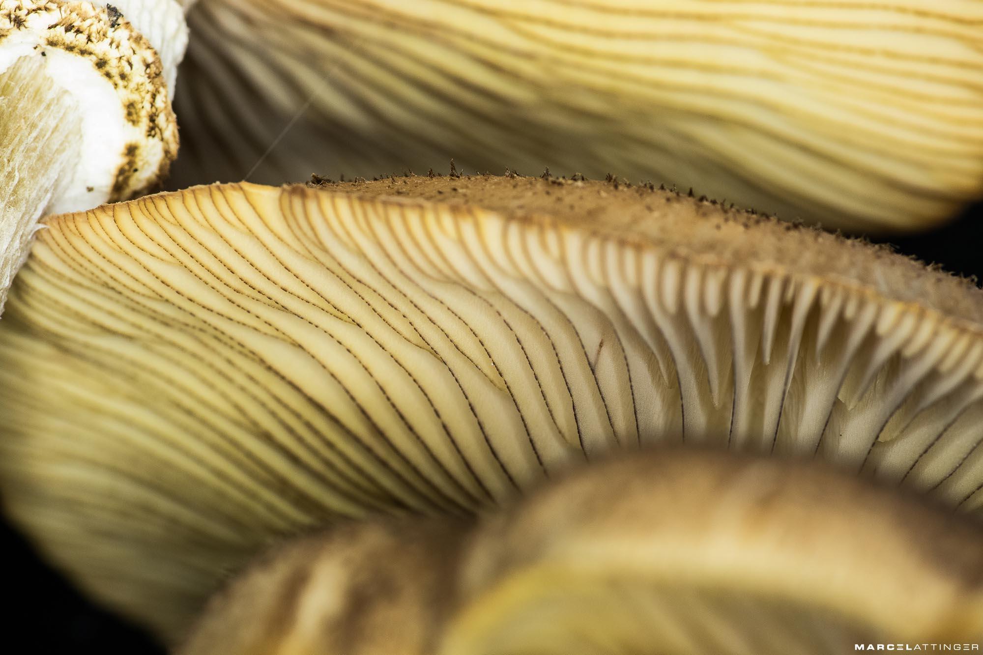 Onderkant van een groep paddenstoelen