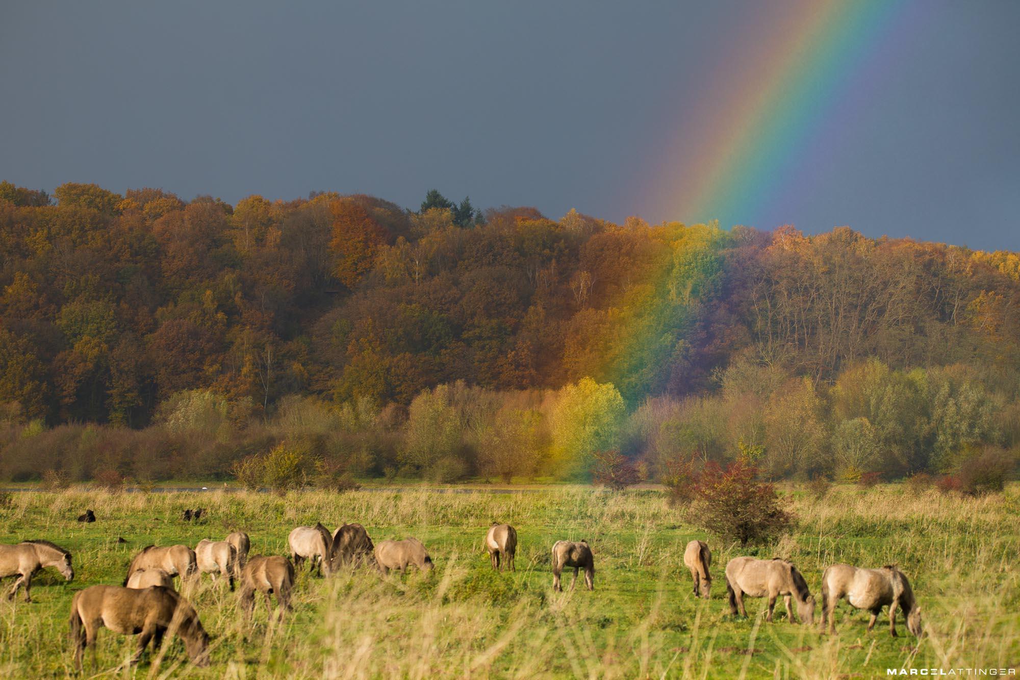 Regenboog boven natuurgebied Blauwe Kamer