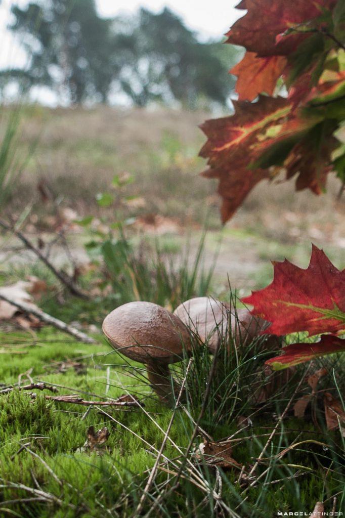 Twee paddenstoelen met herfstbladeren