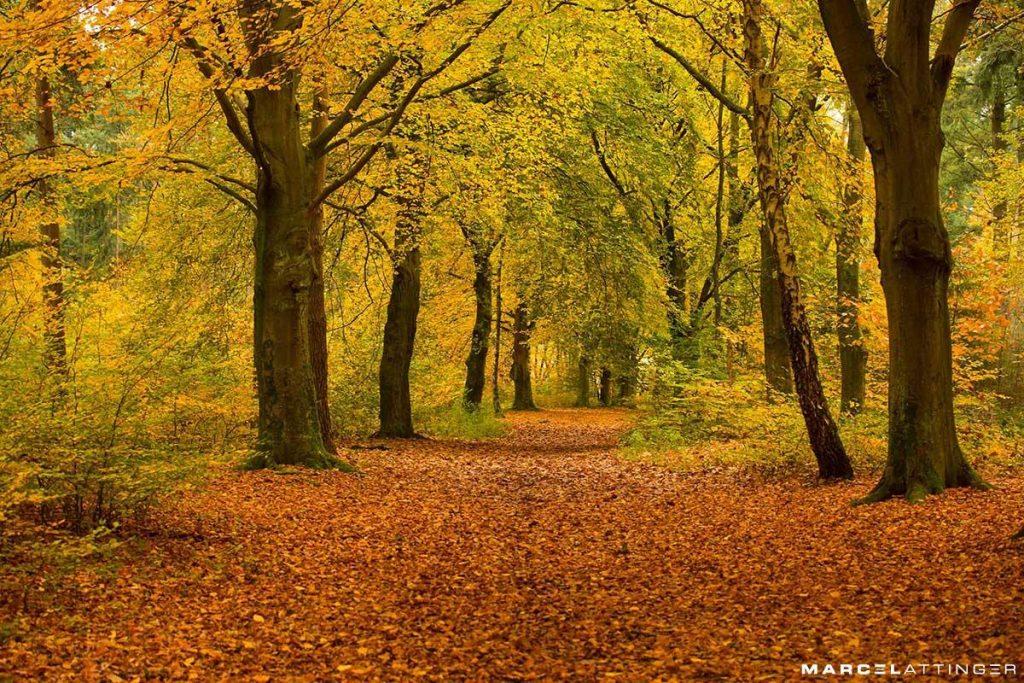 Rhenen in de herfst